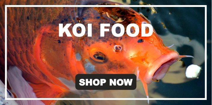 Koi Food, Floating pond pellets from Isle of Ely Koi